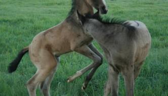 Jak wyhodować konia czempiona? Jeden ważny składnik sukcesu