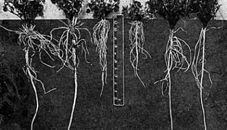 Dlaczego analiza gleby jest ważna?