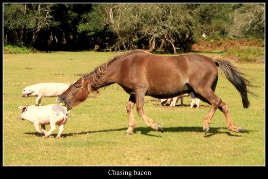Mięsożerny koń. Każdy lubi boczek