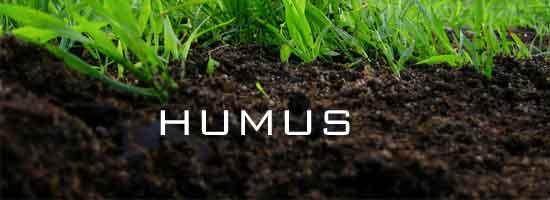 Humus żyzna gleba jak zwiększyć zawartość humusu czarnoziem