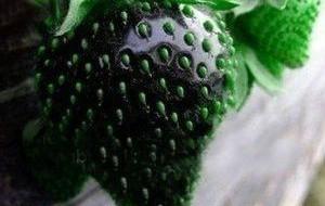Czarne truskawki