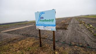 Drogie, słone pyry robią karierę w Holandii