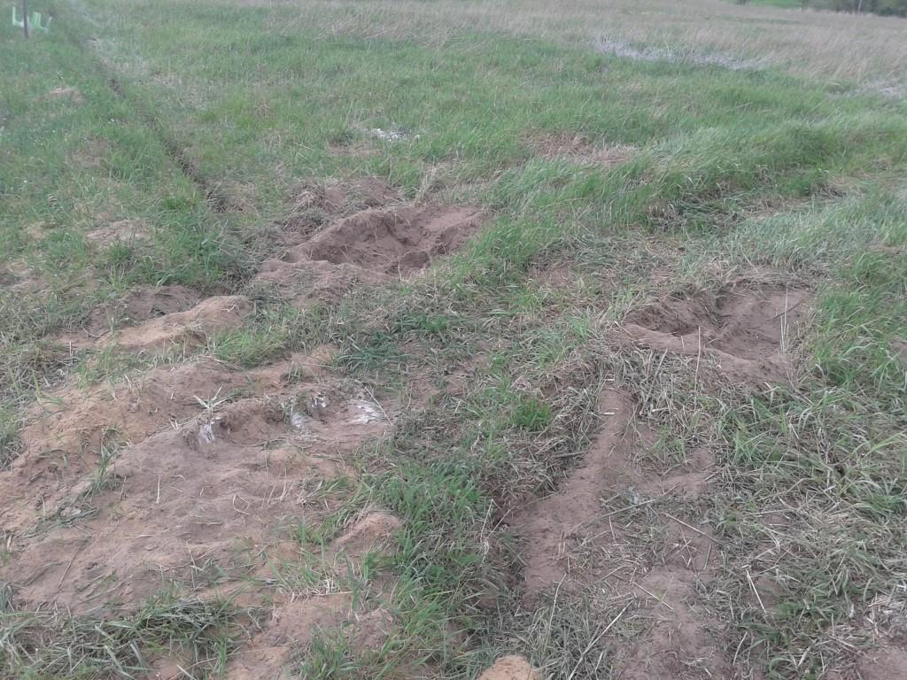 Wylewanie mączki skalnej na pole nawożenie mikroelementy pierwiastki śladowe