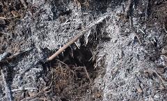 Dlaczego Twój kompost jest gówniany?